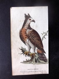 After George Edwards 1799 Hand Col Bird Print. Crowned Eagle
